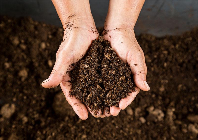 Các loại phân hữu cơ  và ưu điểm của từng loại